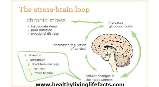 Sleep Deprivation Effects on the Body - Shocking Discovery